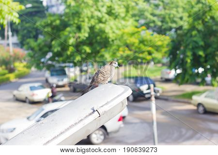 one pigeon preparing to fly on the electric light pole