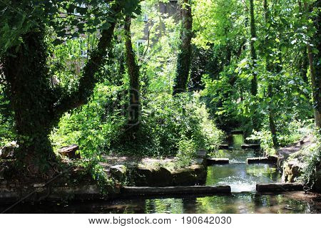 Beautiful and lucid pure stream in the wood.
