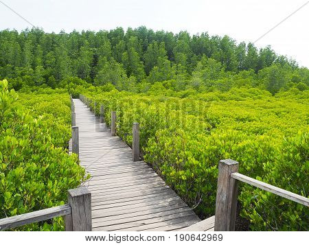 Small wooden walkway A passage into the woods Around the wooden walkway have the trees are bright colors.