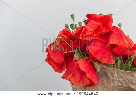 Blossoming wild poppies on a light background. Wallpaper screensaver background. Spring flowers. Natural drugs. Spring flowers. Natural drugs.