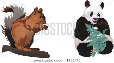 squirrel and panda illustration isolated on white background poster