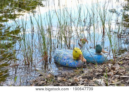 colorful duck decoy in rural pond with sky reflection in water