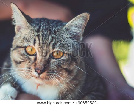 cute funny cat close up young playful cat on a bed domestic cat relaxing cat cat resting cat playing at home elegant cat.
