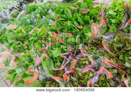 RUSSIA, MOSCOW, JUNE 11, 2017: Different types of green salad on the shelves in the supermarket Auchan.