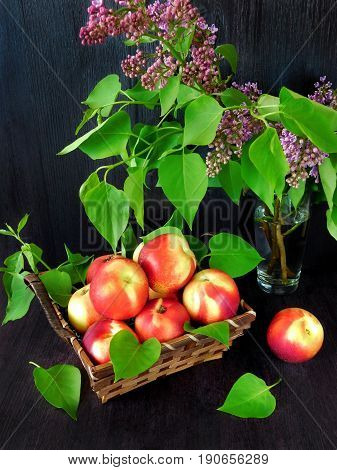 Nectarines in the basket and branches of lilac