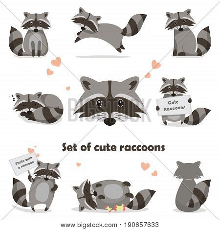 Collection isolated funny raccoon. Emotion little raccoon. Vector set cute raccoon. Cartoon raccoon in children style.