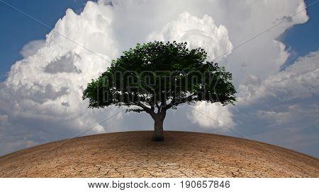 Surrealism. Green tree in arid land.  3D rendering