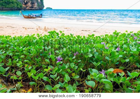 Closeup Of Purple Tropical Flowers On The Beach In Thailand