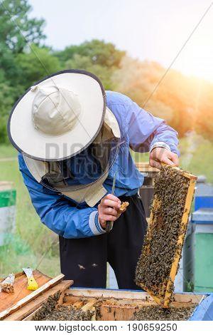 Beekeeper working in apiary bees. Apiculture. beekeeping