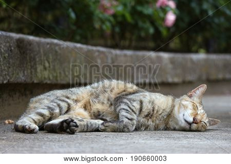a cute sleepy cat on the ground in the garden