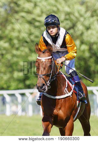 STOCKHOLM SWEDEN - JUNE 06 2017: Closeup of jockey riding a brown gallop arabian race horse at Nationaldags Galoppen at Gardet. June 6 2017 in Stockholm Sweden