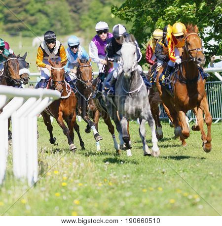 STOCKHOLM SWEDEN - JUNE 06 2017: Coloful jockeys on gallop arabian race horses storming ahead in a curve at Nationaldags Galoppen at Gardet. June 6 2017 in Stockholm Sweden