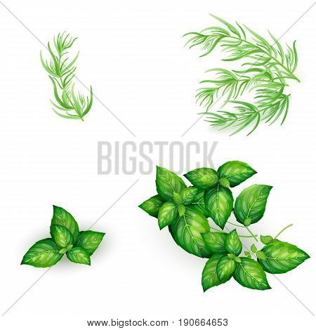 Set Of Basil And Tarragon In Realistic Style
