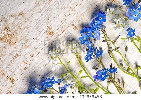 Forget Me Not Flowers Frame On An Old Wooden Background With Copy Space, Top Xiew Diagonal Compositi