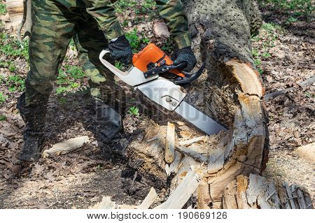 A man in a camouflage suit protective boots and gloves saws chainsaw old rotten tree in the forest. Next lay cut pieces of wood and splinters. Chainsaw flying chips and sawdust.