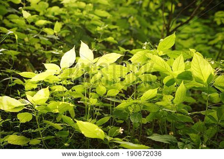 Clouse up green leaves in sunny day background