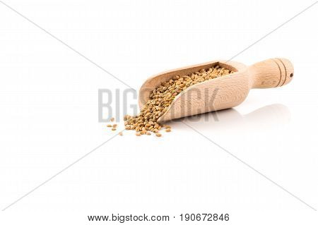 Wheat Grain In Scoop