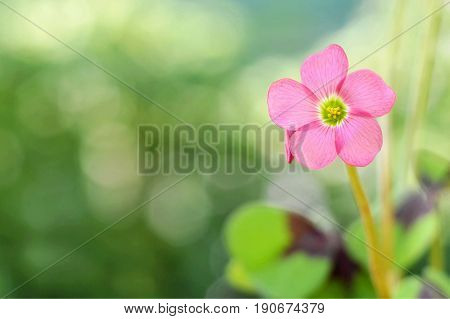 Get well soon card with pink flower on blurred background