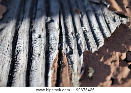 a piece of wood weather beaten and sun dried