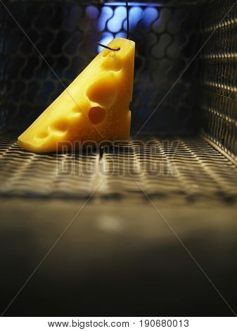 Close up of cheese hang in the open mouse trap