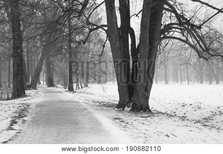 Fog and thaw in the Catherine Park in Tsarskoye Selo