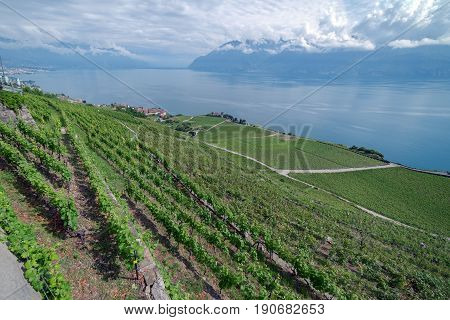 The UNESCO protected Vinyards of Lavaux on the banks of Lake Leman in Switzerland
