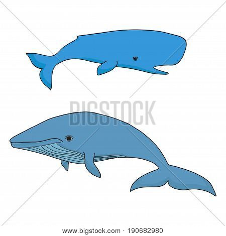Cartoon vector sea whale and cachalot. Vector sketch doodle line art.