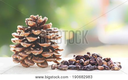 Cone Of Stone Pine And Seeds In Nature Pinus Pinea