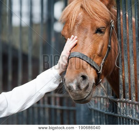 human hand is caressing horse muzzle in animals park