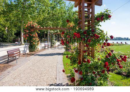 Rose trellis and garden at beach of lake Balaton in Balatonfured Hungary