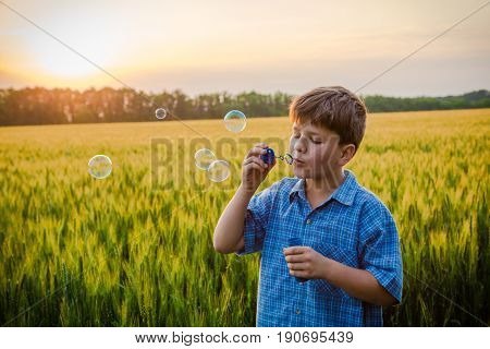 serene boy blowing up the soap bubbles on wheat field at sunset