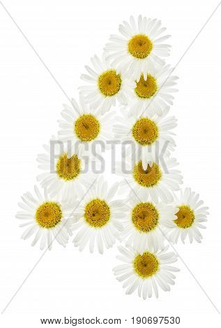 Arabic Numeral 4, Four, From White Flowers Of Chamomile, Isolated On White Background