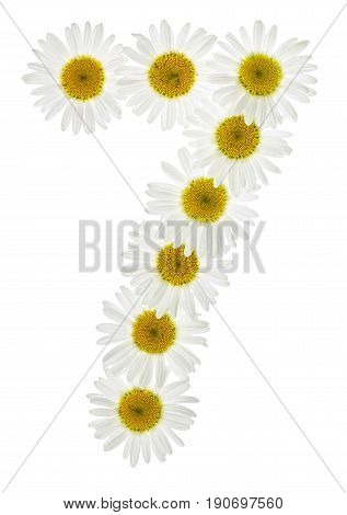 Arabic Numeral 7, Seven, From White Flowers Of Chamomile, Isolated On White Background