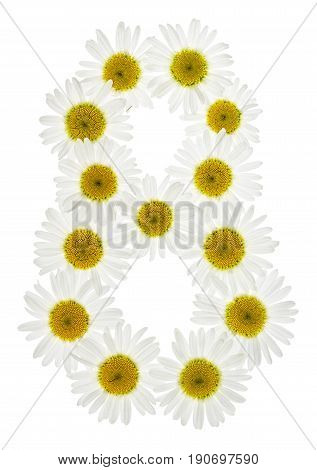 Arabic Numeral 8, Eight, From White Flowers Of Chamomile, Isolated On White Background