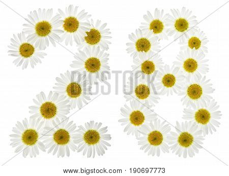 Arabic Numeral 28, Twenty Eight, From White Flowers Of Chamomile, Isolated On White Background