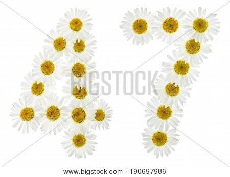Arabic Numeral 47, Forty Seven, From White Flowers Of Chamomile, Isolated On White Background