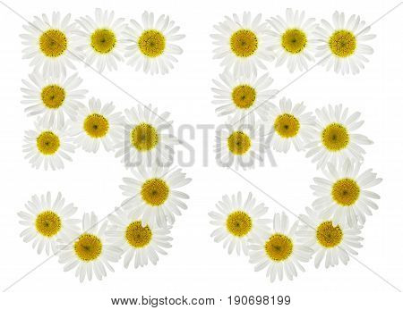 Arabic Numeral 55, Fifty Five, From White Flowers Of Chamomile, Isolated On White Background