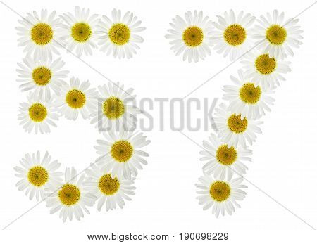 Arabic Numeral 57, Fifty Seven, From White Flowers Of Chamomile, Isolated On White Background