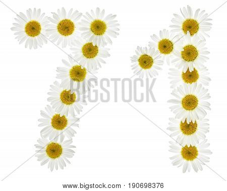 Arabic Numeral 71, Seventy One, From White Flowers Of Chamomile, Isolated On White Background