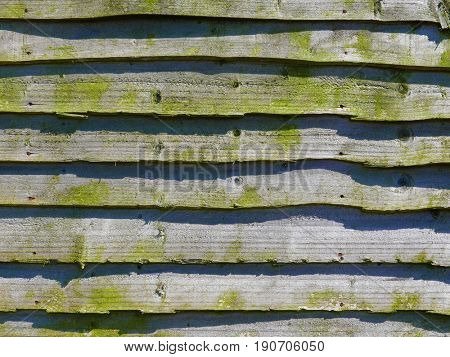 Closeup of weathered larch wood fencing panel