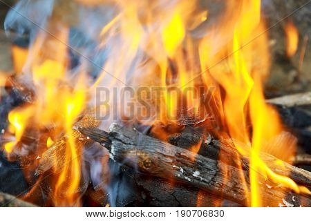 Hot Charcoal in the BBQ Grill Pit fire wood