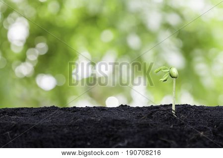 Shoots Tree Sprout In The Soil