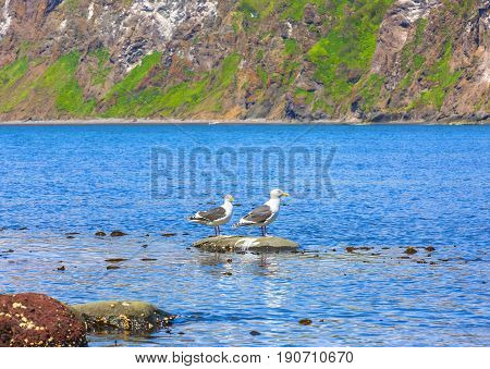 Two seagulls stand on a rock in an ocean bay with blue water