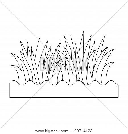 grass icon over whtie background vector illustration