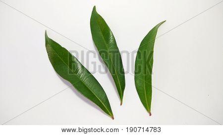 leaf tree photo element stock close up