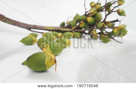 Agriculture industry bouquet of Palm foxtail fruit isolate on white background Focus select at foreground background are blur.