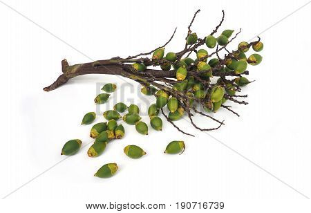 Agriculture industry bouquet of Palm foxtail fruit isolate on white background.