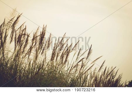 Soft focus flower grass nature abstract style tone vintage winter landscape Ecology brightly copyspace sunrise sunset environment