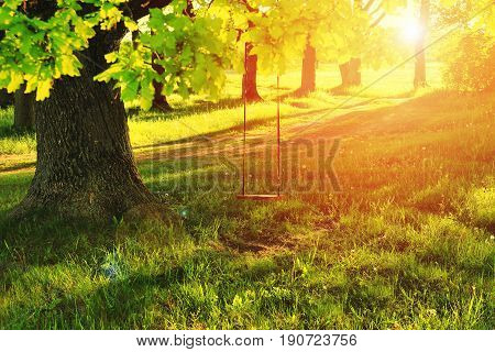 A swing on a tree in a village in the summer. Summer bright rays of the sun shine through the green tree with a swing. Sunny day of green nature outdoor swing on big tree.