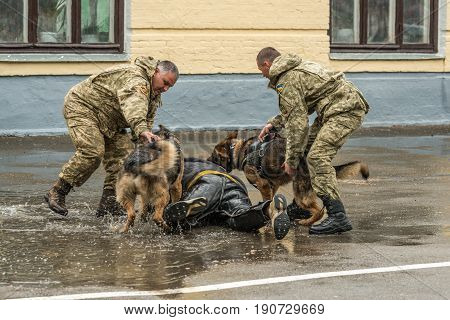 KIEV, UKRAINE, May 26, 2017: Students of the Kiev military lyceum of Ivan Bohun take part in the celebrations dedicated to the end of the school year. Fragment of training East European Shepherd.